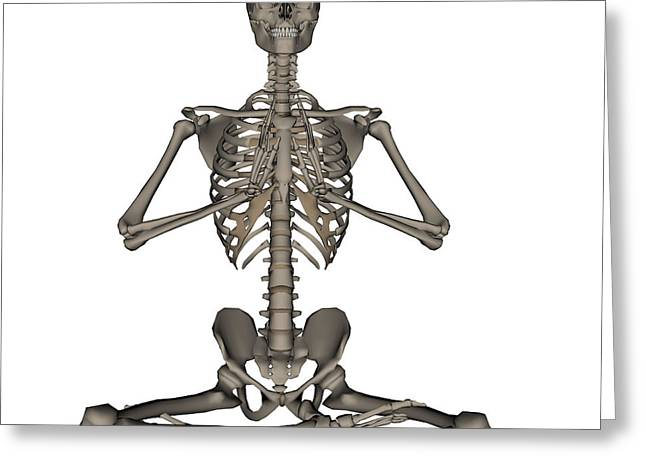 Front View Of Human Skeleton Meditation Greeting Card