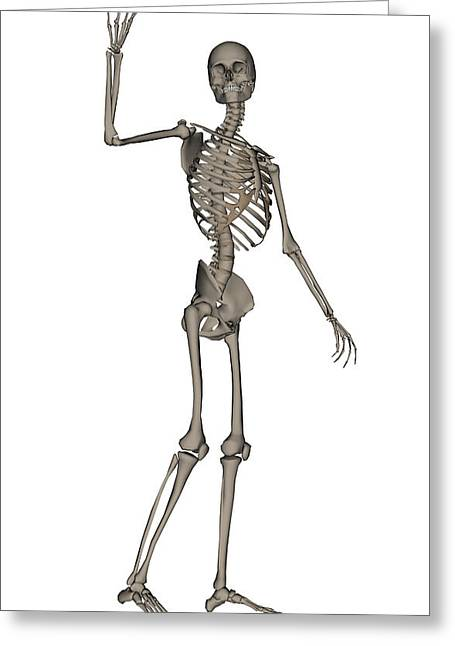 Front View Of Human Skeleton Waving Greeting Card by Elena Duvernay