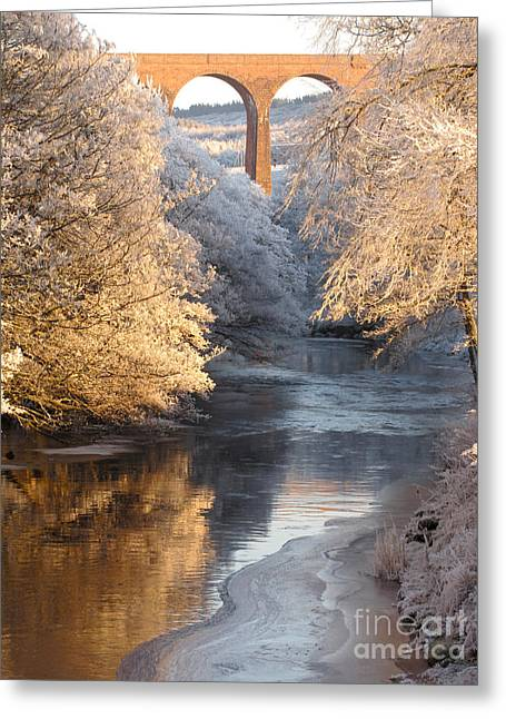 Greeting Card featuring the photograph Frost And Ice by Jacqi Elmslie