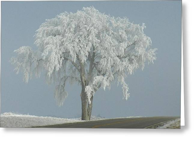 Frost Covered Lone Tree Greeting Card by Penny Meyers