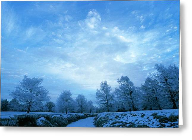 Frost-covered Trees At Dawn Greeting Card