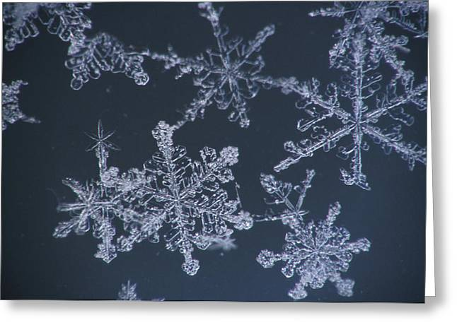 Frost Crystal On Glass Kodiak Isl Greeting Card by Marion Owen