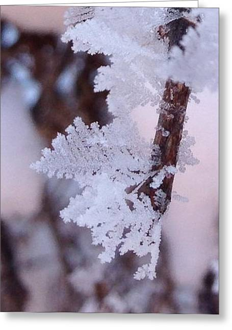 Frost Leaves Greeting Card by Gaby Tench