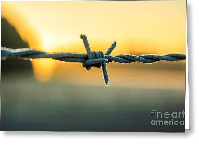 Frost On Barbed Wire At Sunrise Greeting Card by Michael Cross