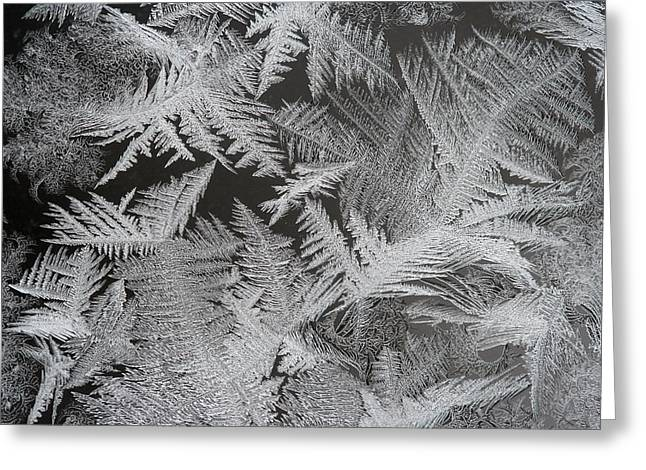 Frost Patterns Greeting Card by Carolyn Reinhart