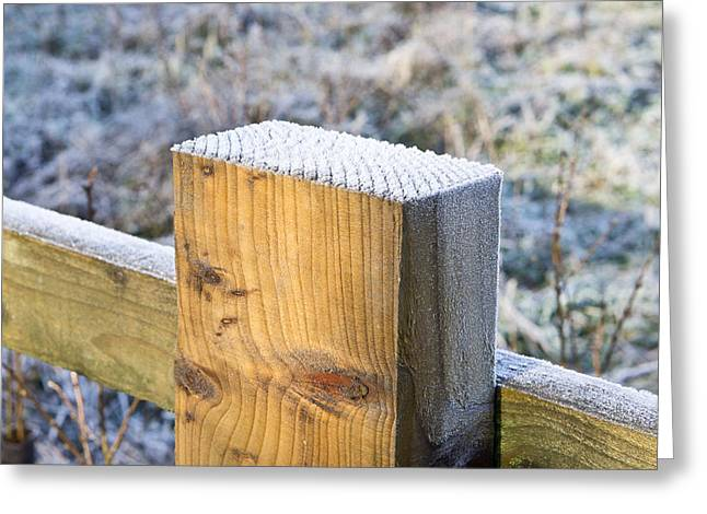 Frost Greeting Card by Tom Gowanlock