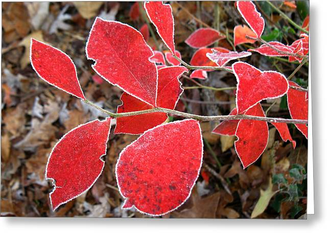 Greeting Card featuring the photograph Frosted Blueberry Leaves by William Tanneberger