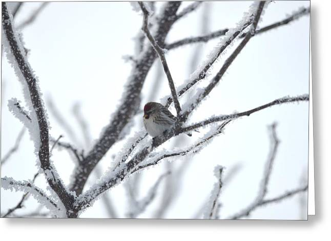 Greeting Card featuring the photograph Frosted Branches by Dacia Doroff