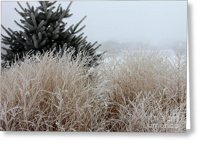 Frosted Grasses Greeting Card