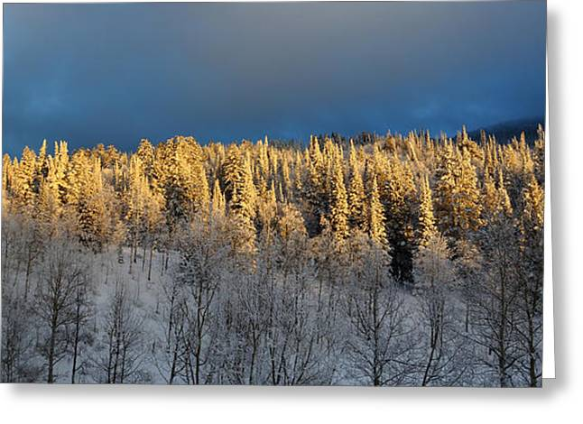 Frosted Grove Greeting Card