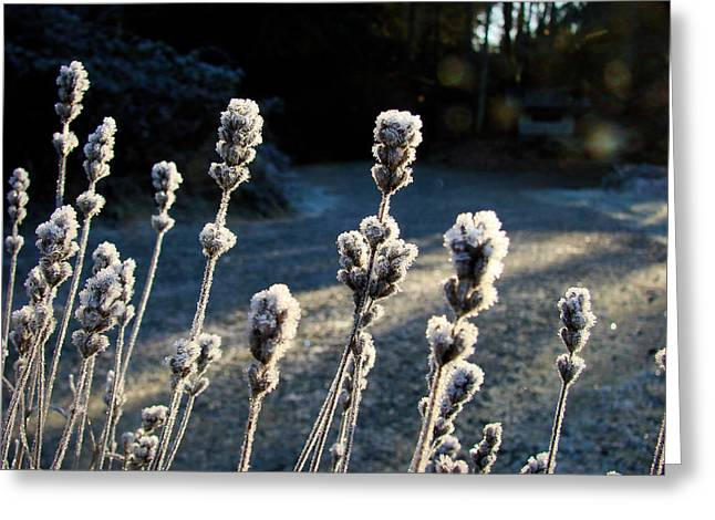 Frosted Greeting Card by Ronda Broatch