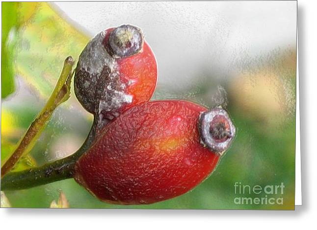 Greeting Card featuring the photograph Frosted Rosehips by Nina Silver