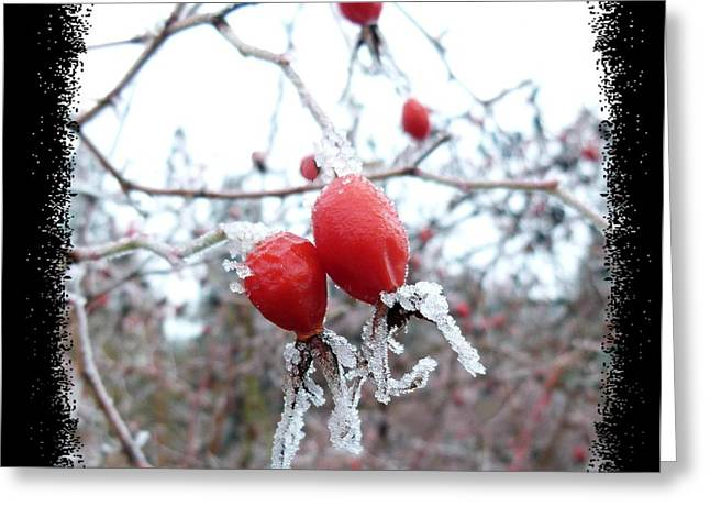 Frosted Rosehips Greeting Card by Will Borden