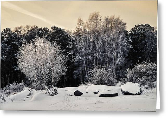Frosted Trees Greeting Card by Vladimir Kholostykh