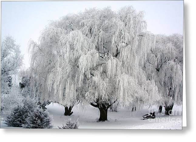 Frosted Willow Trees Greeting Card