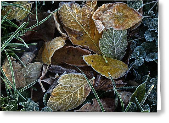 Frosty Autumn Leaves Greeting Card by Ellen Tully