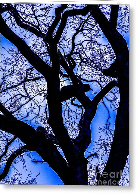 Frosty Blue Abstract Greeting Card by Mitch Shindelbower