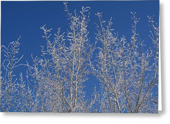 Frosty Blue Sky Greeting Card