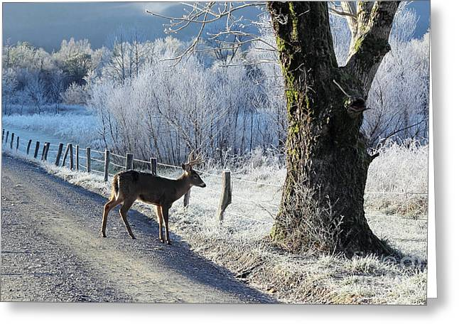 Frosty Cades Cove II Greeting Card by Douglas Stucky