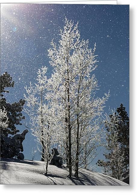 Frosty Colorado Aspen Greeting Card