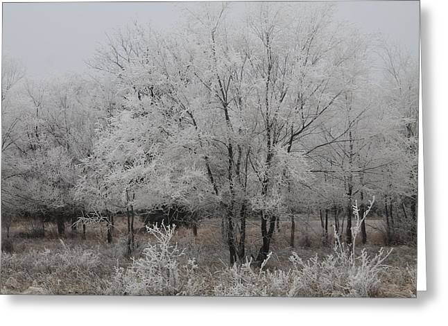 Frosty Day Greeting Card