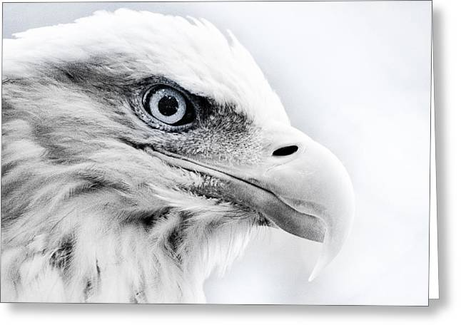Frosty Eagle Greeting Card