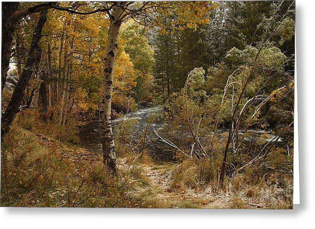 Frosty Fall  Morning Greeting Card by Duncan Selby