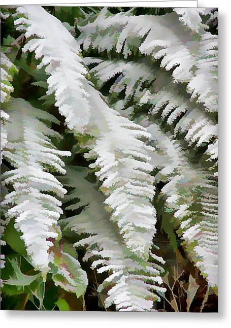 Frosty Ferns Photograph By Ron Roberts
