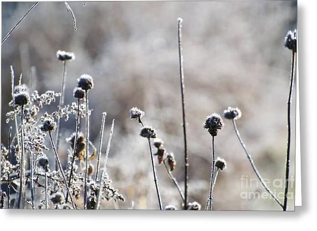 Frosty Flowers Greeting Card