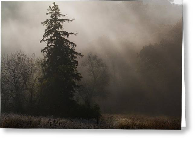 Frosty Foggy Morning Greeting Card