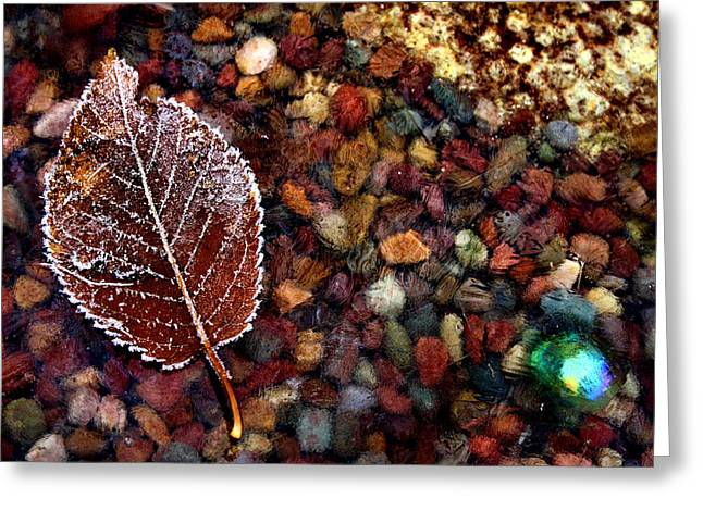 Frosty Freeze Greeting Card by Karen M Scovill