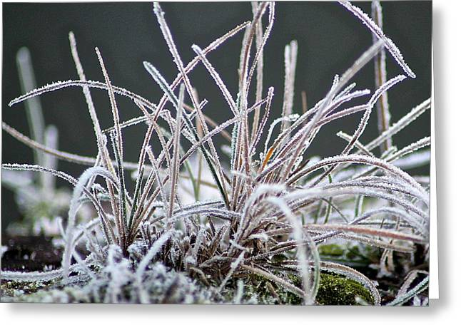 Frosty Grass Greeting Card by Karen Grist