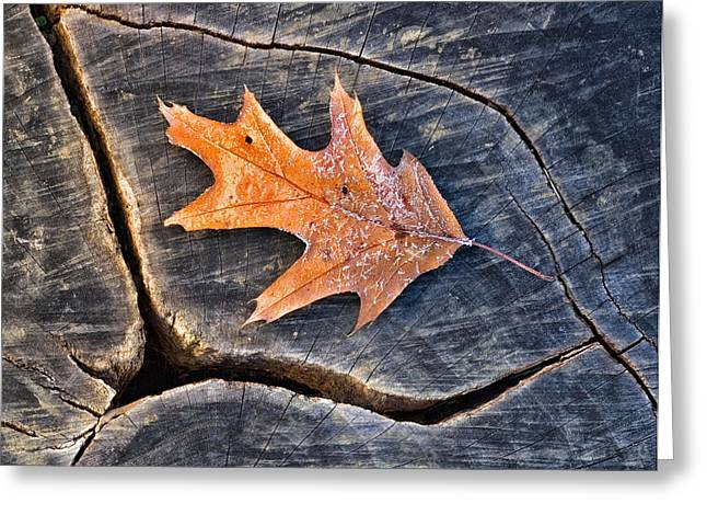 Greeting Card featuring the photograph Frosty Leaf On Tree Trunk by Gary Slawsky