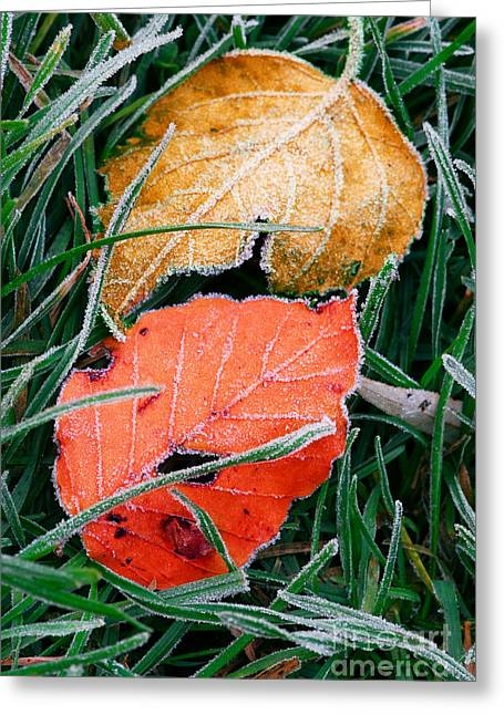Frosty Leaves Greeting Card by Elena Elisseeva