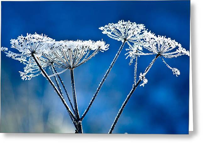 Frosty Light Greeting Card
