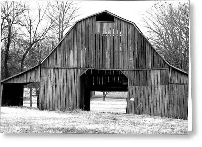 Frosty Morning Bw Photography Greeting Card by Lesa Fine