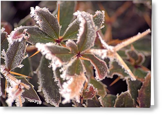 Frosty Morning Greeting Card by Dave Woodbridge