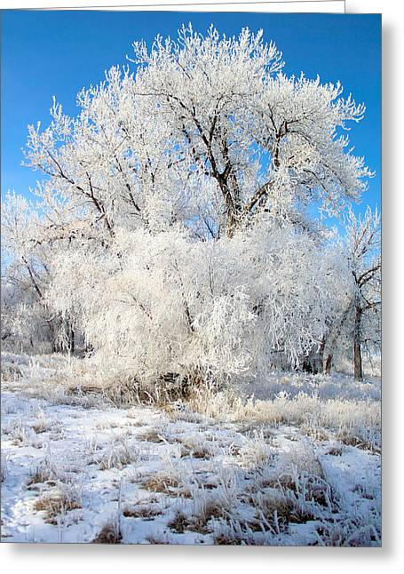 Frosty Morning Greeting Card by Shane Bechler