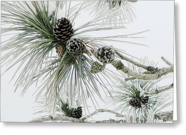 Frosty Pine Cones Greeting Card by Carolyn Reinhart