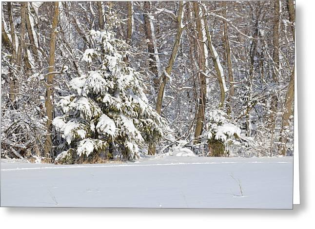 Greeting Card featuring the photograph Frosty Pine by Dacia Doroff