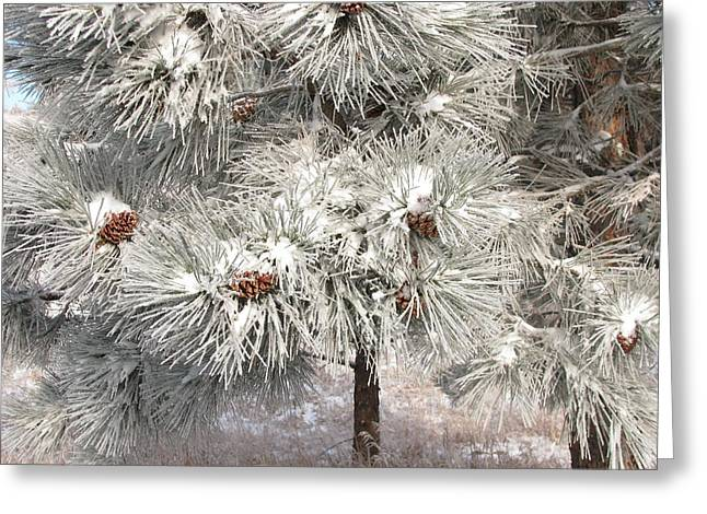 Frosty Pinetree Greeting Card by Steven Parker