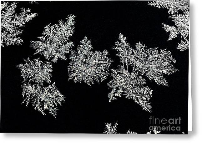 Frosty Snowflakes Greeting Card by Mariola Bitner