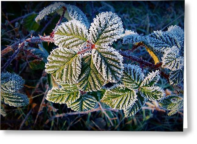 Greeting Card featuring the photograph Frosty Ten Degrees by Julia Hassett