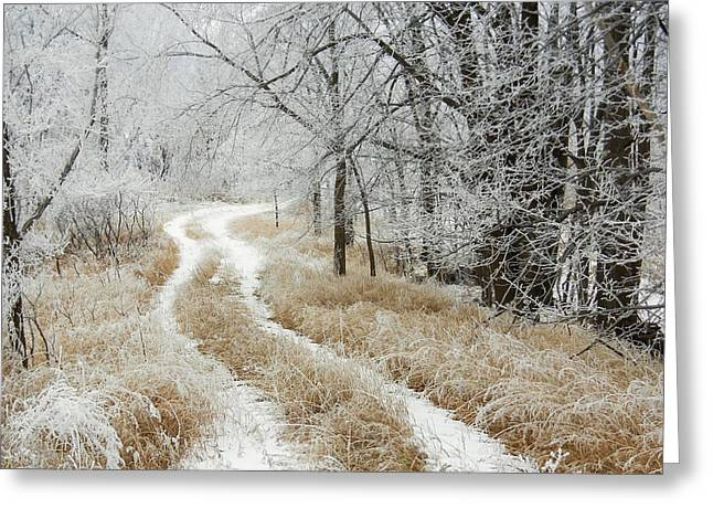 Greeting Card featuring the photograph Frosty Trail 2 by Penny Meyers