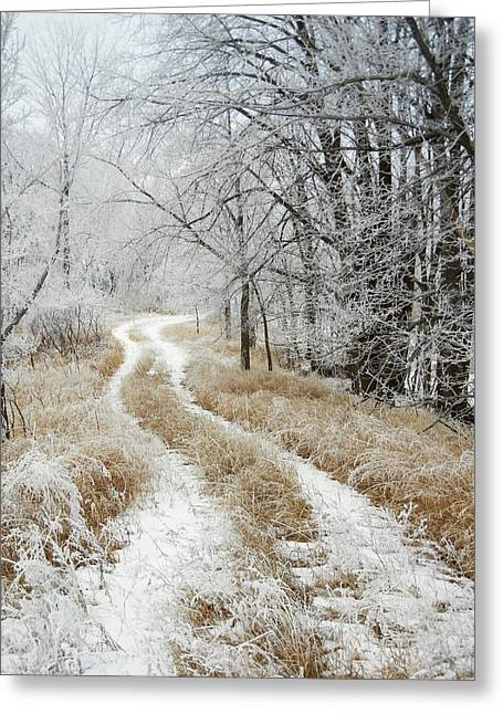 Frosty Trail Greeting Card by Penny Meyers