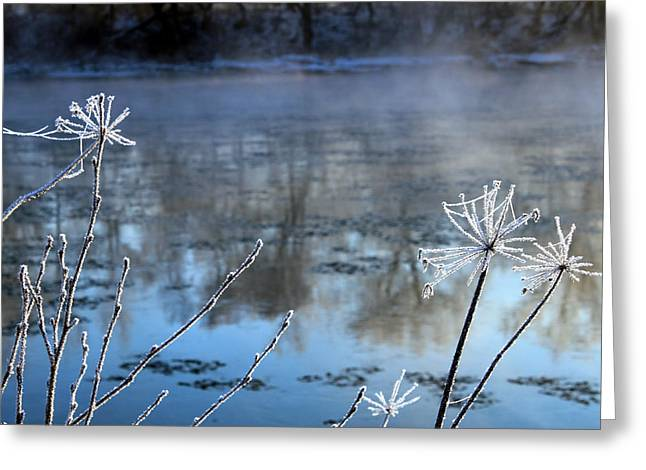 Frosty Webs And Weeds Greeting Card by Hanne Lore Koehler