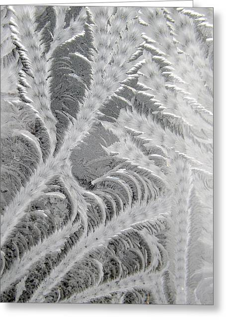 Frosty Window Art Greeting Card
