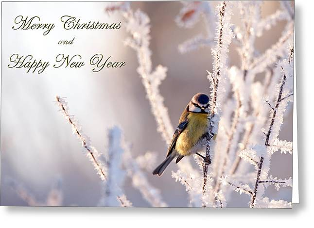 Frosty With Christmas Greetings Greeting Card by Torbjorn Swenelius