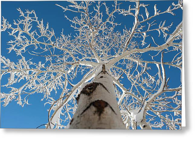Frozen Bare Tree In Winter Against Blue Greeting Card by Pete Mcbride