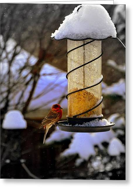 Frozen Feeder And Disappointment Greeting Card by Zafer Gurel